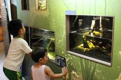 台灣昆蟲館-水棲昆蟲