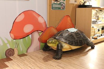 台灣昆蟲館-大烏龜