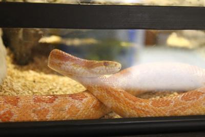 台灣昆蟲館-蛇