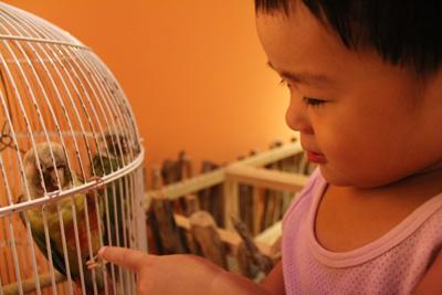 台灣昆蟲館-鸚鵡