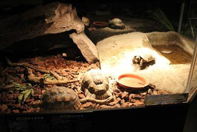 台灣昆蟲館-陸龜
