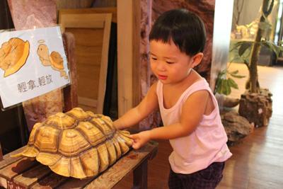 台灣昆蟲館-可以摸的龜殼