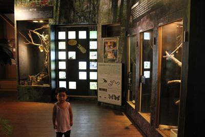 台灣昆蟲館-擬態偽裝區