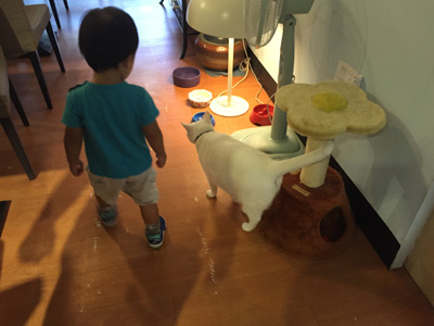 讀貓園-貓咪中途咖啡-男孩與貓
