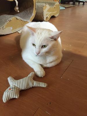 讀貓園-貓咪中途咖啡-店貓