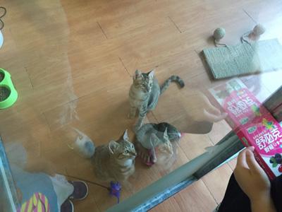 讀貓園-貓咪中途咖啡-收養的流浪貓貓們