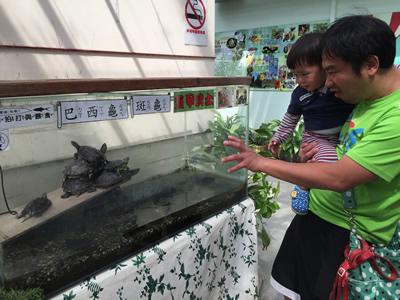 準園生態莊園-烏龜