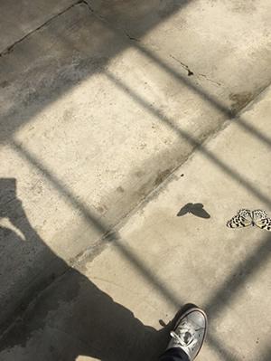 準園生態莊園-蝴蝶