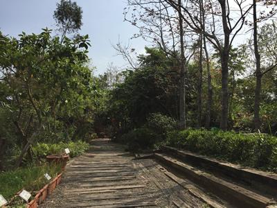 準園生態莊園-山林步道