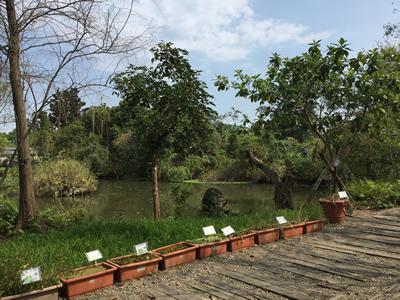 準園生態莊園-生態池